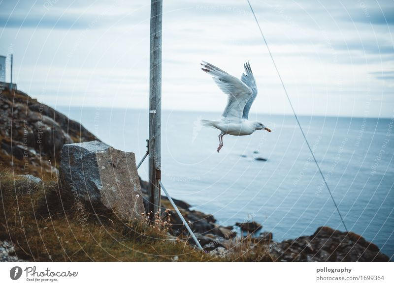 Norwegen Himmel Natur Ferien & Urlaub & Reisen Wasser Landschaft Blume Wolken Tier Herbst Umwelt Sport Küste Gras Tourismus Freiheit Vogel