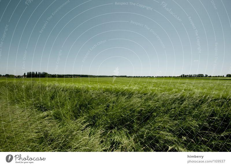 bio flatrate Himmel Natur Ferien & Urlaub & Reisen Pflanze Sommer ruhig Erholung Umwelt Landschaft Frühling Freiheit Feld Klima Freizeit & Hobby groß Ausflug