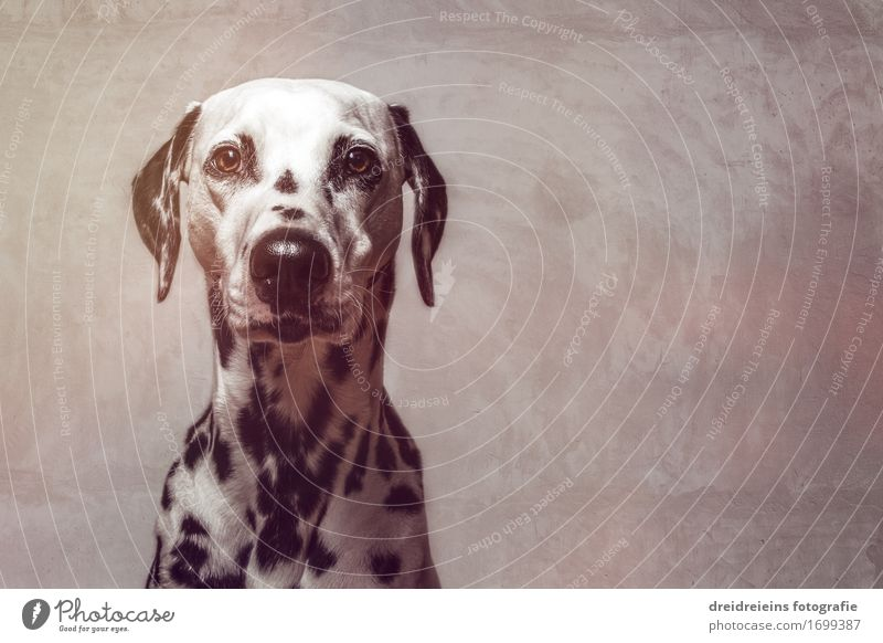 Bewerbungsbild Mauer Wand Fassade Tier Haustier Hund 1 beobachten Blick warten elegant Erfolg Freundlichkeit niedlich Coolness Mut loyal Verschwiegenheit