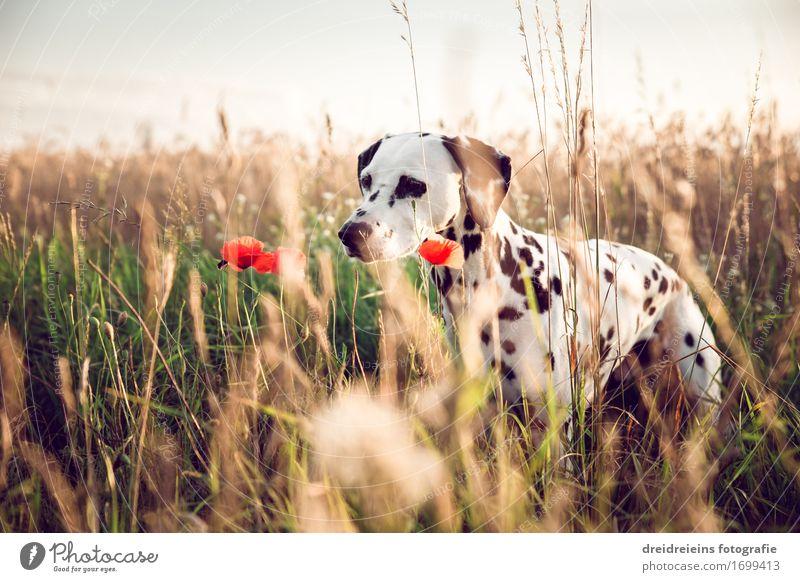 Neugieriger Hund. Natur Pflanze Sommer Tier Haustier 1 beobachten warten Freundlichkeit natürlich niedlich Lebensfreude Sympathie Ehrlichkeit Interesse