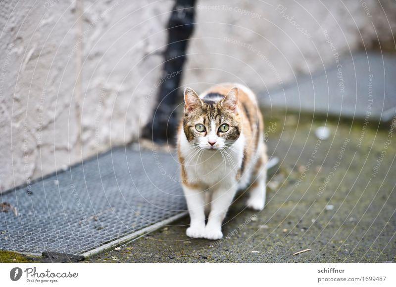 AST 9 | Kätzchen aus Alsfeld Tier Haustier Katze Blick beobachten Hauskatze erschrecken Außenaufnahme Menschenleer