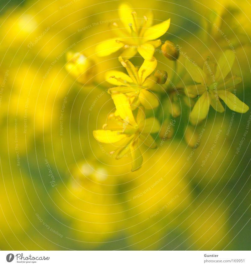mankái desu Natur schön grün Pflanze Freude gelb Gefühle Blüte Frühling Glück Park Zufriedenheit Feld Umwelt Sträucher Ast
