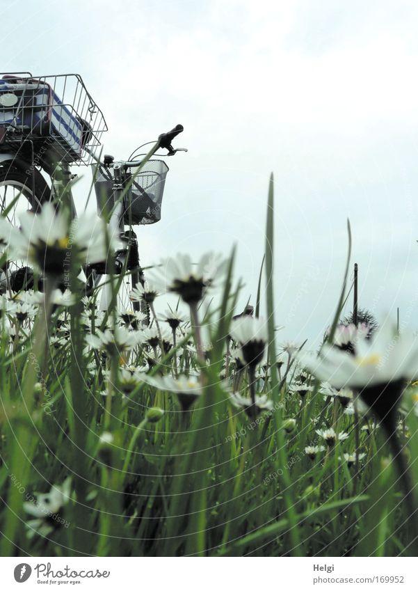 Radlers Rast Himmel Natur blau weiß grün Pflanze Blume Freude Wolken Erholung Umwelt Wiese Gras klein Metall Fahrrad