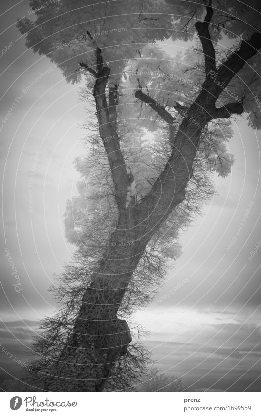 B. Umwelt Natur Landschaft Pflanze Sommer Baum Blatt Seeufer dunkel grau schwarz weiß Infrarotaufnahme Zweige u. Äste Schwarzweißfoto Außenaufnahme Experiment