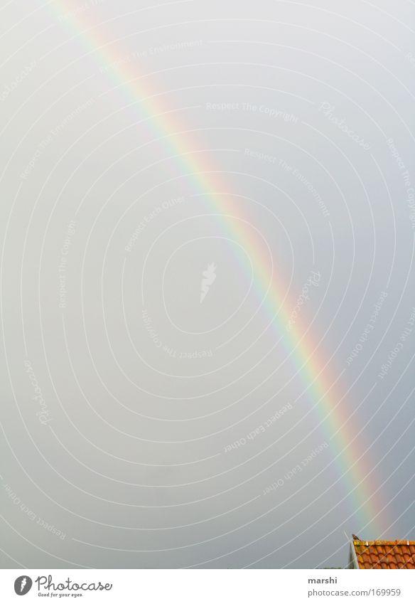 Regenbogen Farbfoto Außenaufnahme Natur Wassertropfen Himmel Wetter Gewitter Tier Vogel dunkel Unendlichkeit schön mehrfarbig Stimmung Dach Dachziegel Amsel