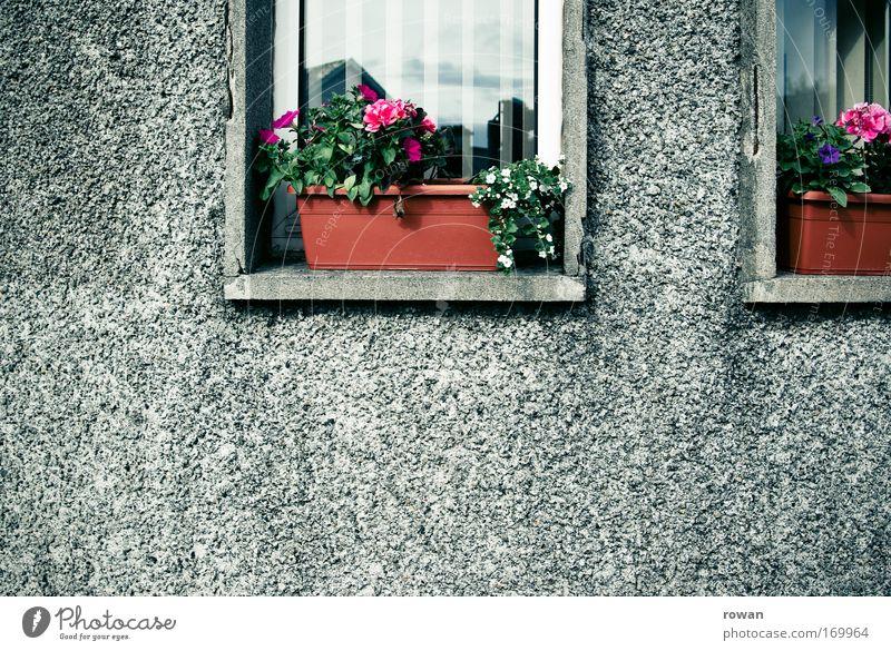 rauputz und blumenkästen Farbfoto Außenaufnahme Menschenleer Textfreiraum links Textfreiraum unten Tag Haus Einfamilienhaus Fassade Fenster Blühend schön