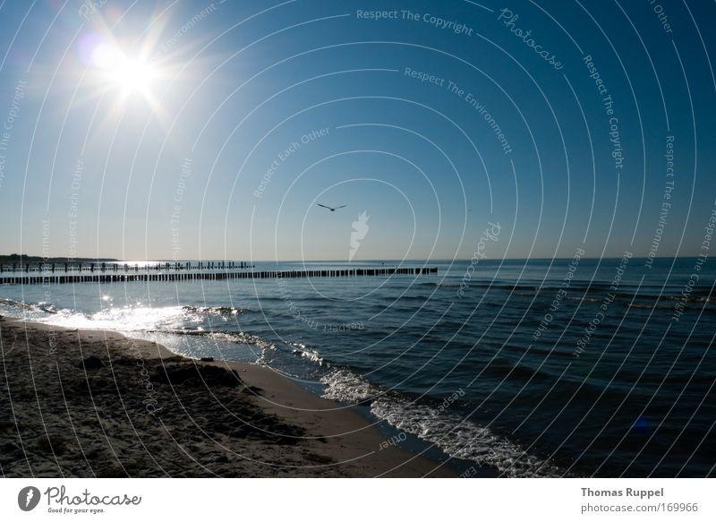 Strandflug Farbfoto Außenaufnahme Menschenleer Textfreiraum rechts Textfreiraum oben Textfreiraum unten Abend Silhouette Reflexion & Spiegelung Sonnenlicht