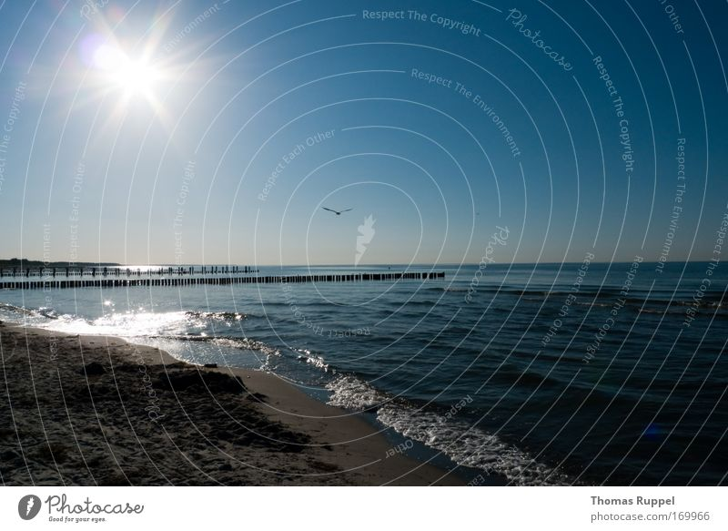 Strandflug Natur Wasser Himmel Sonne Meer blau Sommer Strand Ferien & Urlaub & Reisen Ferne Freiheit Wärme Landschaft Wellen Küste Wetter