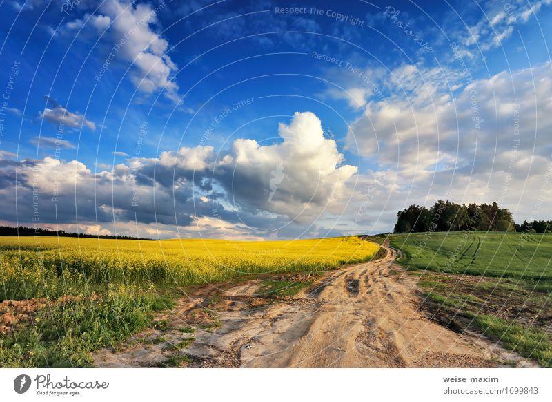 Rapsfelder der Landstraße im Frühjahr Himmel Natur blau Pflanze Sommer grün Baum Blume Landschaft Wolken gelb Blüte Frühling Wege & Pfade Feld Sträucher