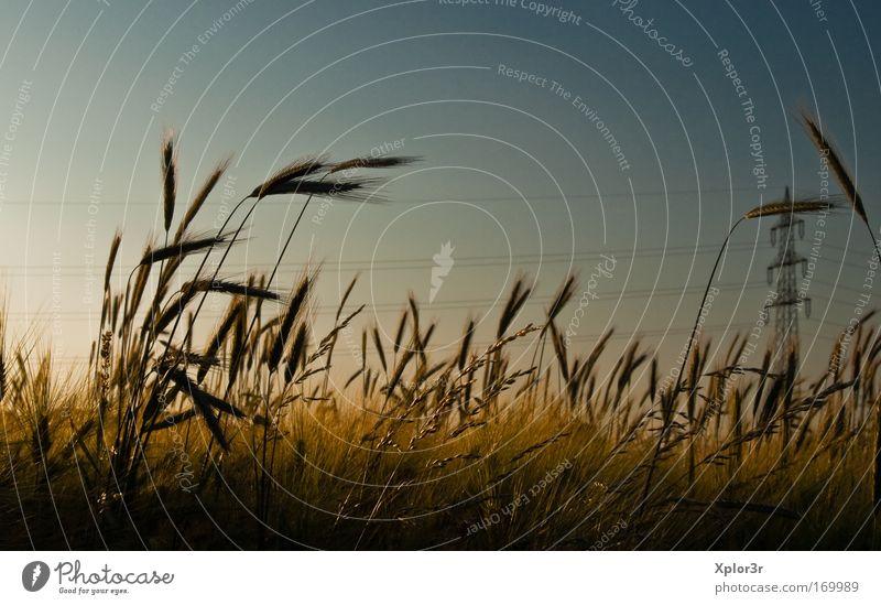 Korn Sommer Landschaft Feld Romantik Schönes Wetter fleißig Verantwortung Frühlingsgefühle Nutzpflanze
