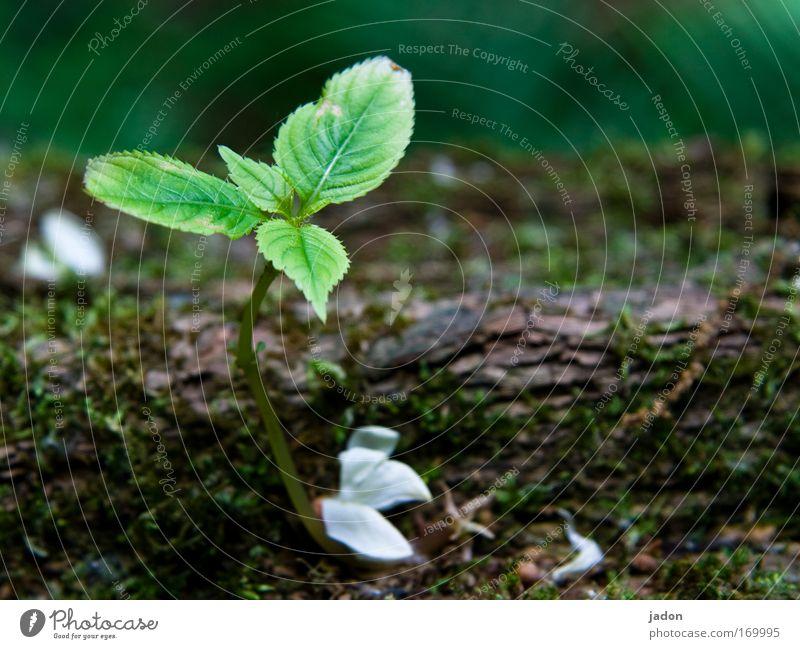 noch im wachsen grün Baum Pflanze Blatt Einsamkeit ruhig Frühling klein Blüte natürlich Wachstum Idylle Blühend sanft Blütenblatt Überleben