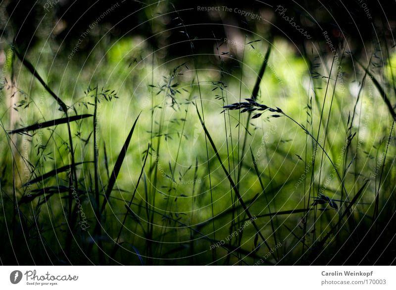 Heuschnupfen I. Natur grün Pflanze Sommer ruhig schwarz Umwelt Wiese Gras Frühling Park Wind Feld Klima ästhetisch Perspektive