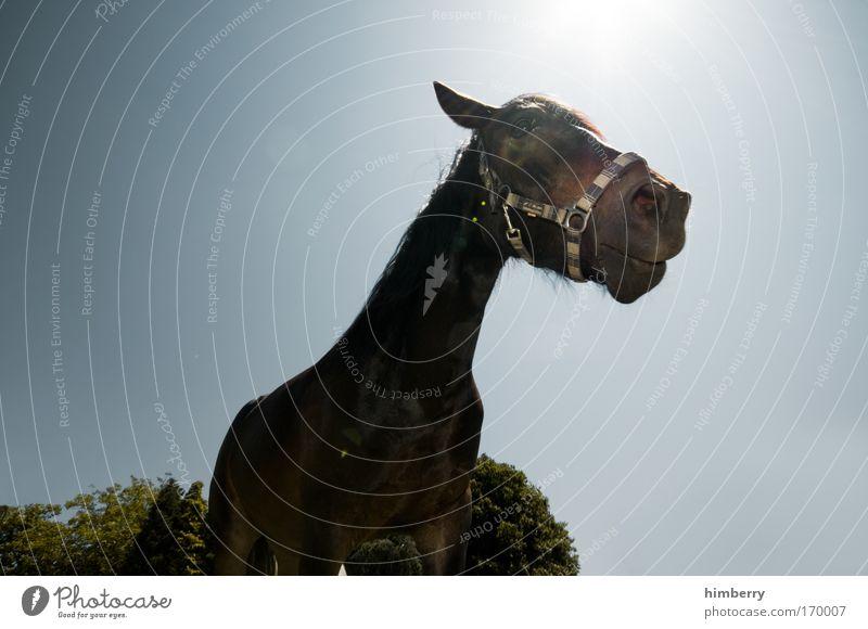 fury is back Natur Sonne Tier Umwelt Pferd Neugier nah Tiergesicht Interesse Nutztier Pferdekopf Vor hellem Hintergrund Blauer Hintergrund