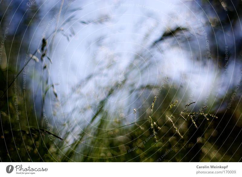 Heuschnupfen II. Himmel Natur blau grün Pflanze Sommer Umwelt gelb Wiese Gras Bewegung Frühling Park Wind glänzend frei