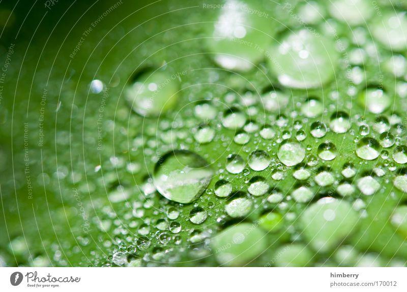 tears of the sun Natur Wasser schön Pflanze ruhig Blatt Leben Erholung Stil Park Design elegant Umwelt Wassertropfen Lifestyle frisch