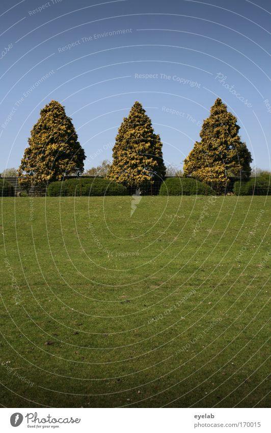 Aller guten Dinge sind... Himmel Natur grün Baum Pflanze Sommer Landschaft Wiese Gras Garten Park elegant Ordnung ästhetisch Wachstum Sträucher