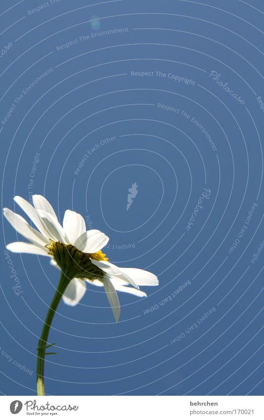erwachen Farbfoto Außenaufnahme Menschenleer Textfreiraum oben Sonnenlicht Tee schön Sommer Umwelt Natur Pflanze Wolkenloser Himmel Frühling Schönes Wetter