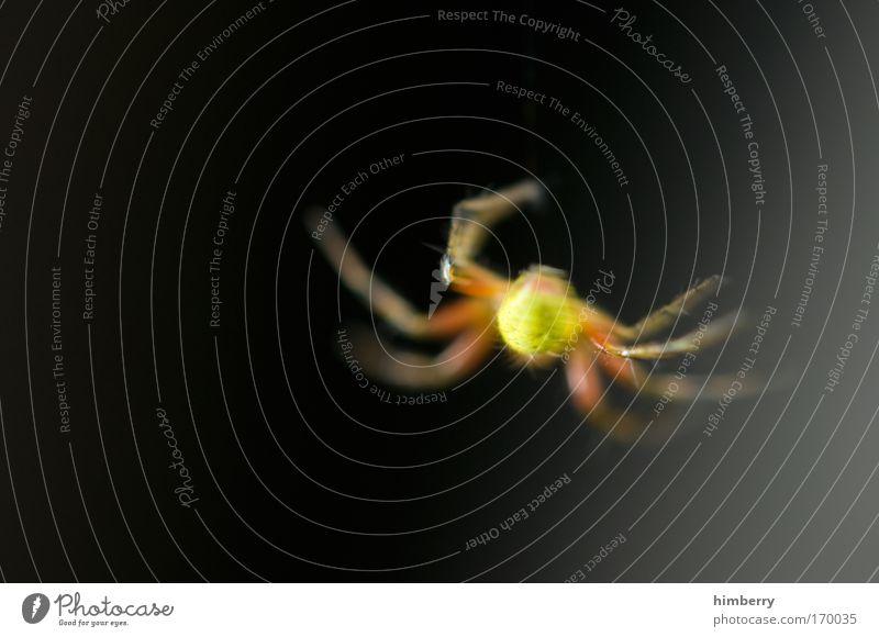 spinnst du? Natur Sommer Tier gelb dunkel Wiese Herbst Gefühle Park Angst Wildtier außergewöhnlich bedrohlich Neugier gruselig Todesangst