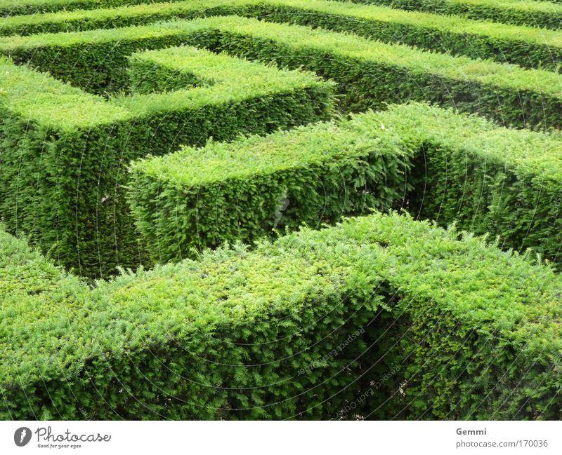 Labyrinth Tourismus Ausflug Sightseeing Sommer Irrgarten Natur Pflanze Sträucher Blatt Grünpflanze Garten Park Hecke Sehenswürdigkeit Denken entdecken gehen