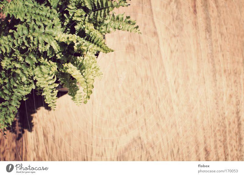 [MUC-09] Kaffeepause Natur Pflanze Blume Farn Grünpflanze Topfpflanze Umwelt Café Holz Tisch Tischplatte Strukturen & Formen Maserung Blatt grün Umweltschutz