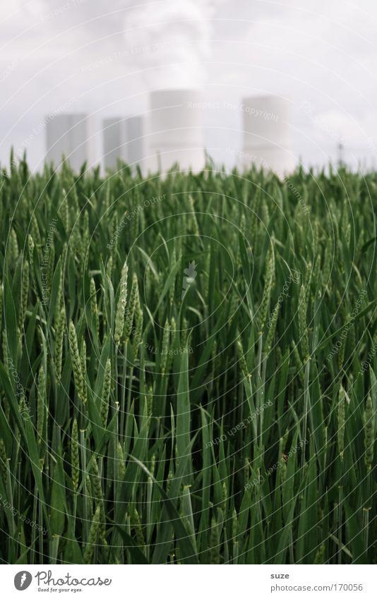 Hier rauchts grün Pflanze Umwelt Feld dreckig Zukunft Wandel & Veränderung Industrie Fabrik Getreide Rauch Bioprodukte Wirtschaft Umweltschutz Weizen Umweltverschmutzung