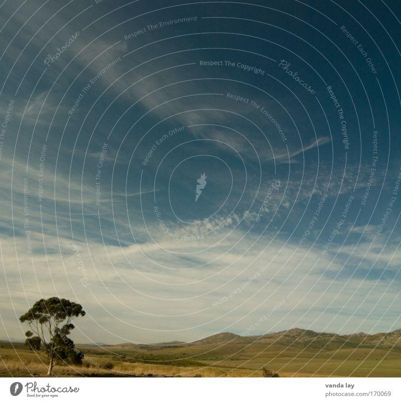 Afrikanischer Himmel Natur Himmel Baum Sonne Pflanze Sommer Wolken Ferne Berge u. Gebirge Landschaft Wetter Umwelt Erde Afrika Schönes Wetter Steppe