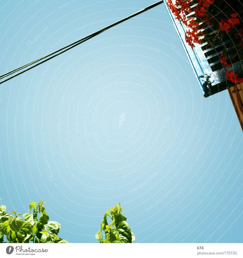 garden groove Himmel blau grün Baum Pflanze rot Sommer Blume Blatt Haus Fenster Garten Luft frisch Kabel leuchten
