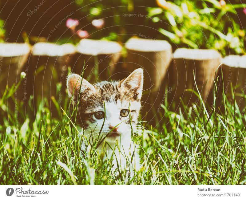 Baby-Katze, die im Gras spielt Pflanze Sommer grün weiß Tier Tierjunges Umwelt lustig Gesundheit Spielen Glück grau braun Fröhlichkeit genießen