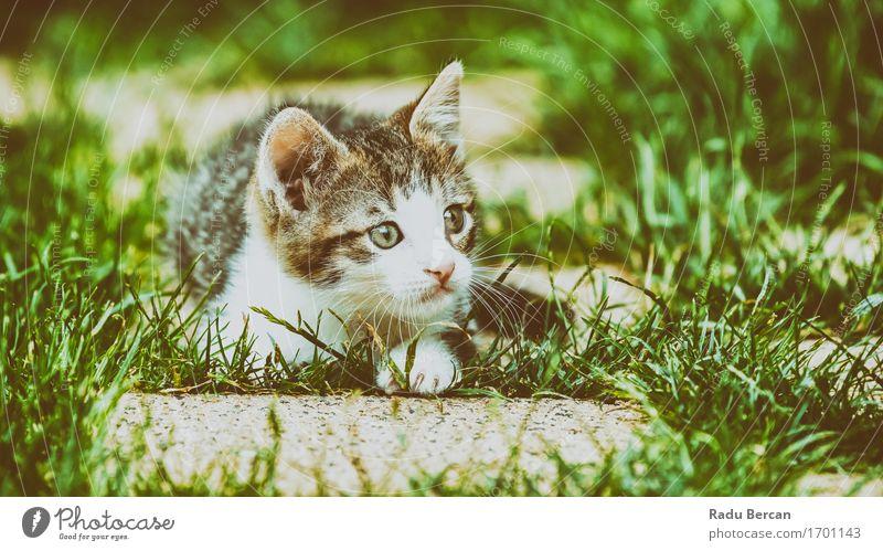 Baby-Katze, die im Gras spielt Natur schön grün weiß Tier Tierjunges Gefühle lustig Spielen Glück grau wild liegen Fröhlichkeit beobachten