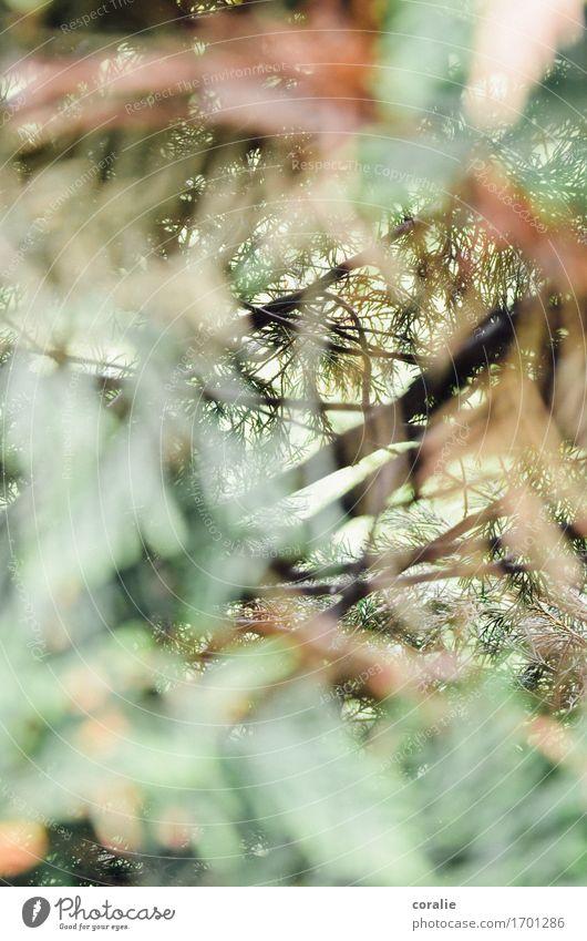 Ab ins Unterholz Natur Pflanze Garten Park Wald wild Nadelbaum Tannennadel Sträucher Schattenspiel Lichtstrahl Ast Höhle Waldboden verzweigt bewachsen
