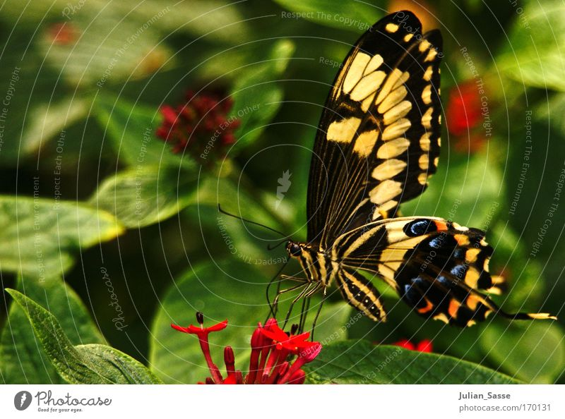Kleine Schönheit Natur Blume Tier Umwelt Schmetterling Wildtier