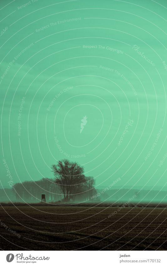 Stille Außenaufnahme Menschenleer Textfreiraum oben Dämmerung Silhouette Erholung ruhig Jagd Umwelt Natur Landschaft Erde Himmel Horizont Winter Baum Feld Wald