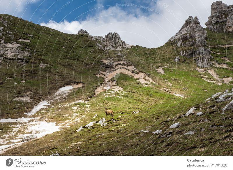 Steingeiß Ferien & Urlaub & Reisen Berge u. Gebirge wandern Natur Landschaft Wolken Sommer Alpen Gipfel Tier Wildtier 1 beobachten ästhetisch exotisch feminin