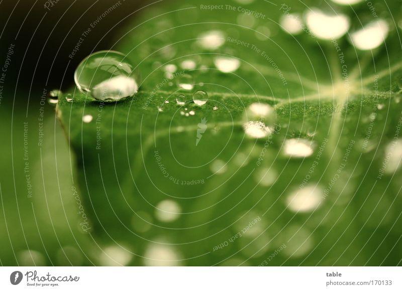 Sommerregen grün Pflanze Sommer Blatt Leben Gefühle Frühling Traurigkeit Regen Lebensmittel Wetter Wassertropfen nass Wachstum rein Vergänglichkeit
