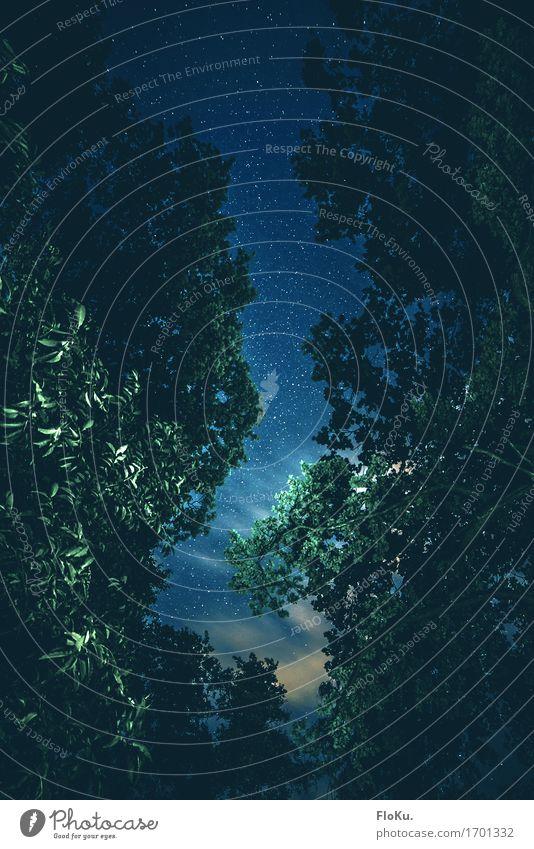 never stop looking up Umwelt Natur Urelemente Luft Himmel Wolken Nachthimmel Stern Sommer Baum Blatt Wald dunkel gruselig natürlich blau grün türkis Stimmung