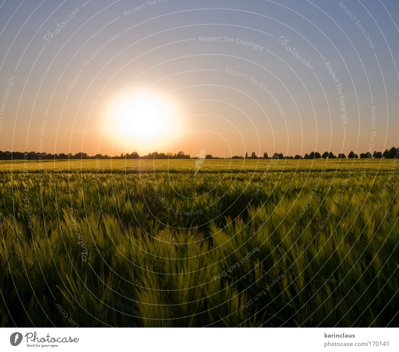 Natur Himmel Sonne grün blau Pflanze rot Sommer gelb Wiese Gras Landschaft Feld rosa Umwelt Sonnenaufgang