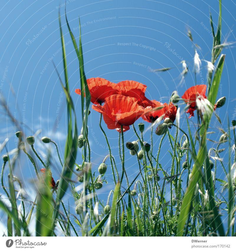 mit den wolken ziehen II Himmel Natur schön Pflanze Blume Tier Wiese Umwelt Gras Blüte Haare & Frisuren Gesundheit Tanzen Gesäß berühren Blühend