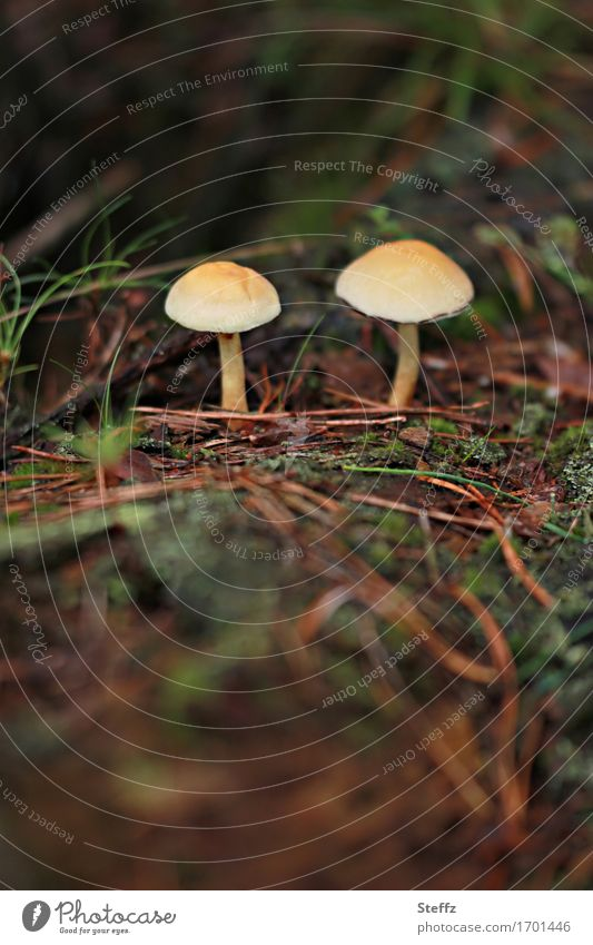 Zwei im Wald Umwelt Natur Erde Herbst Waldboden Herbstwald Wachstum klein natürlich schön braun gelb grün Waldstimmung Herbstgefühle 2 Zusammensein Zusammenhalt