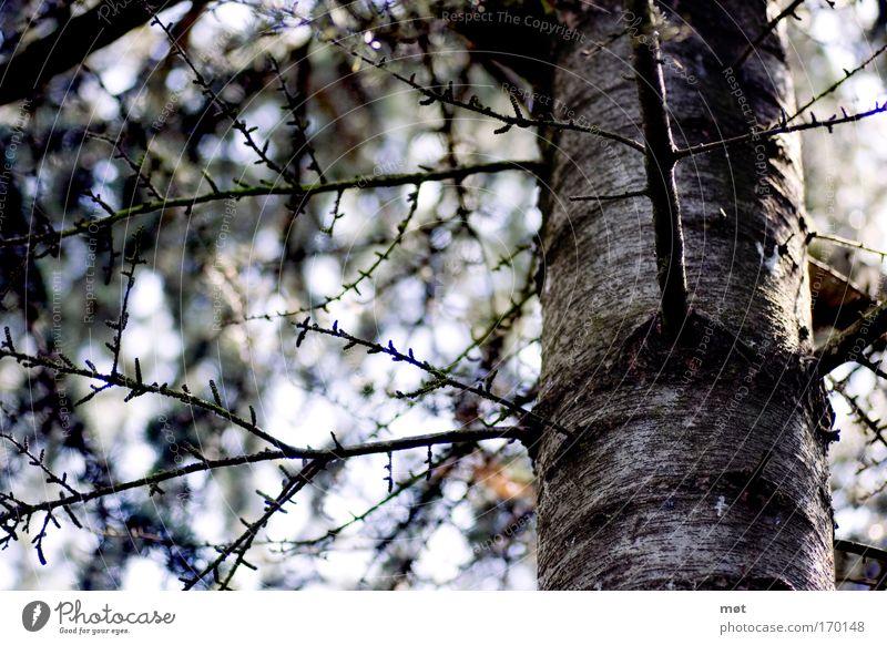 Farbspiel Farbfoto Gedeckte Farben Außenaufnahme Kontrast Sonnenlicht Umwelt Natur Frühling Schönes Wetter Baum Moos Wald Holz blau braun Baumrinde Ast