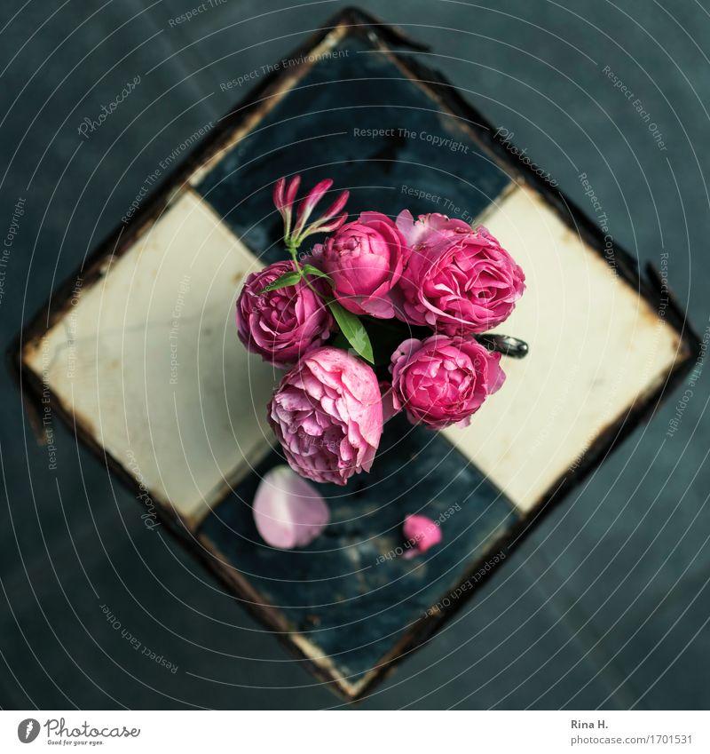 RosenStill von oben II Blüte Blühend Vergänglichkeit Fliesen u. Kacheln Rost Stillleben altehrwürdig Grünpflanze verblüht