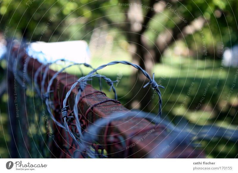 grenze alt weiß grün Baum Umwelt Gras Garten Metall braun Zaun Rost silber Schönes Wetter Draht Aggression Maschendrahtzaun