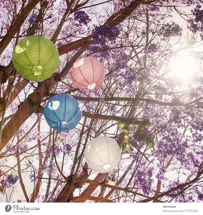 Bunte Lampions in deinem Baum exotisch harmonisch Erholung Sommer Sonne Party Feste & Feiern Sonnenlicht Garten Park Papier Dekoration & Verzierung Blüte