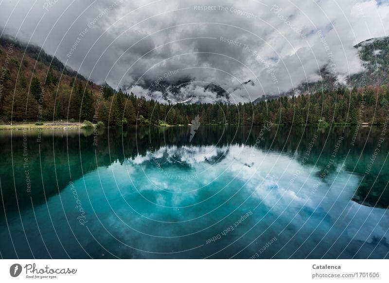 Zwei Welten Ausflug Freiheit Sommer Berge u. Gebirge wandern Natur Landschaft Himmel Wolken schlechtes Wetter Tannen Wald Seeufer ästhetisch nachhaltig blau