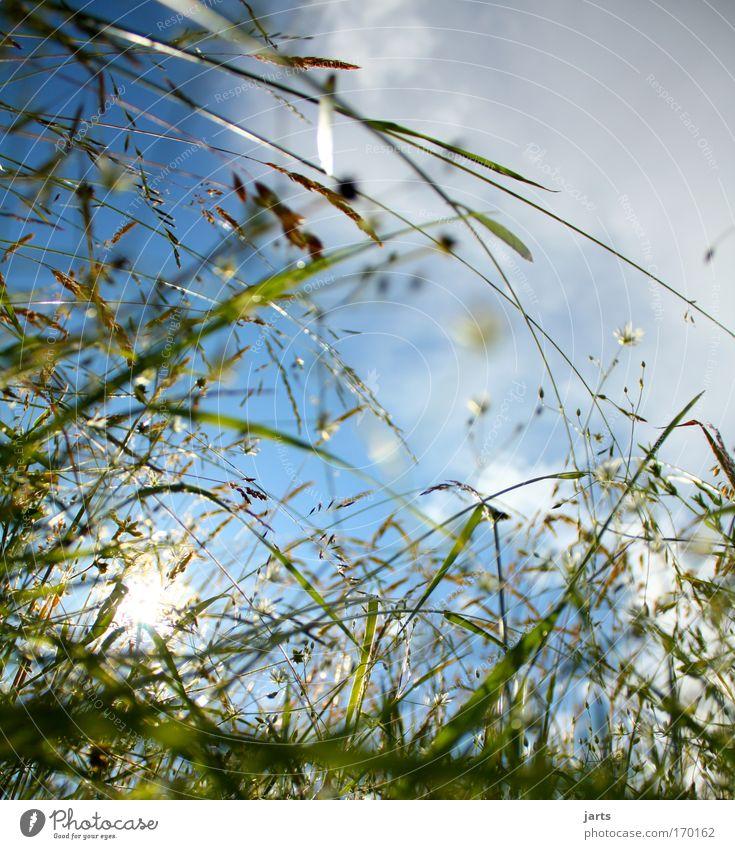 der himmel ist blau.... Farbfoto Außenaufnahme Nahaufnahme Menschenleer Textfreiraum rechts Textfreiraum oben Tag Sonnenlicht Sonnenstrahlen