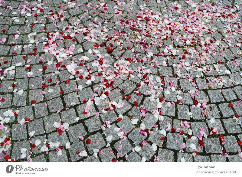 Rosenblätter Farbfoto Außenaufnahme Menschenleer Tag Sonnenlicht Vogelperspektive Stein Duft frei Freundlichkeit Fröhlichkeit frisch mehrfarbig grau rot weiß