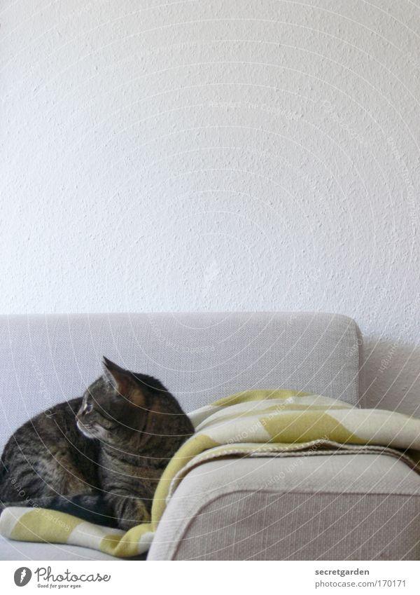 .....kam ein vogel vorbeigeflogen. schön weiß grün Einsamkeit Wand Stil grau Mauer Katze Wärme Zufriedenheit Wohnung Design Coolness liegen Häusliches Leben