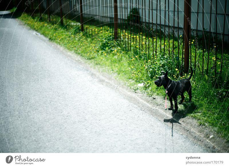 abwarten Natur schön Pflanze Einsamkeit Straße Leben Gefühle Gras Bewegung Freiheit träumen Hund Traurigkeit Wege & Pfade Umwelt Seil