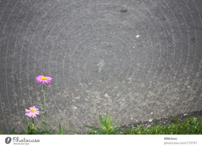 Textfreiraum für alle! Natur Blume Pflanze Blatt Einsamkeit Straße Blüte träumen Wege & Pfade Kraft Umwelt Hoffnung Asphalt Blühend Duft Teer