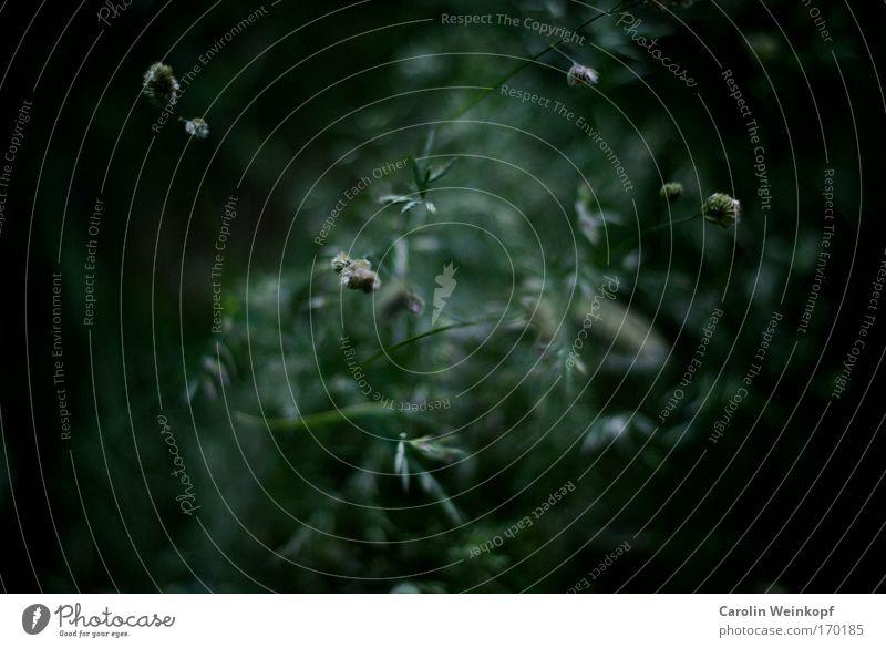 Heuschnupfen III. Natur Pflanze Sommer Umwelt Wiese Gefühle Gras Park Stimmung gefährlich Hoffnung Gelassenheit Allergiker