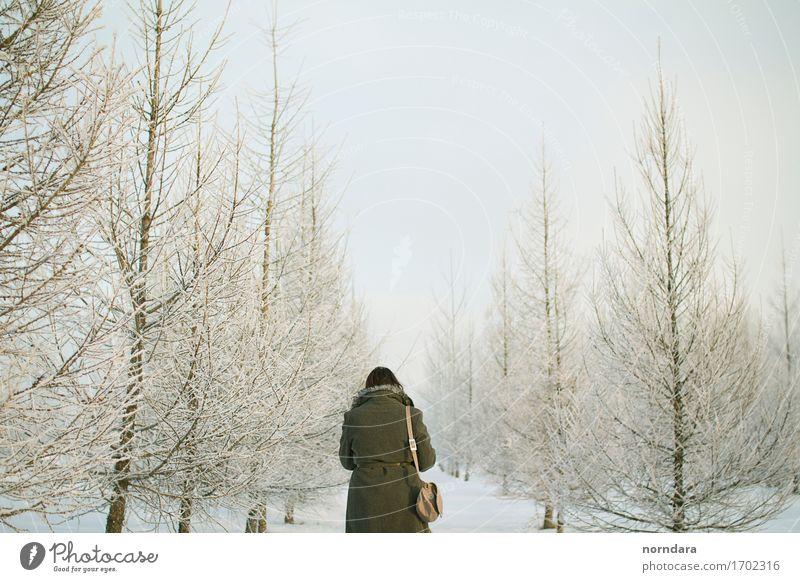 Winterreich Mensch Himmel Natur Weihnachten & Advent Pflanze weiß Baum Wald kalt Umwelt Wege & Pfade Schnee Schneefall Luft Eis